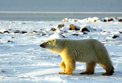 animals found in hot and cold region