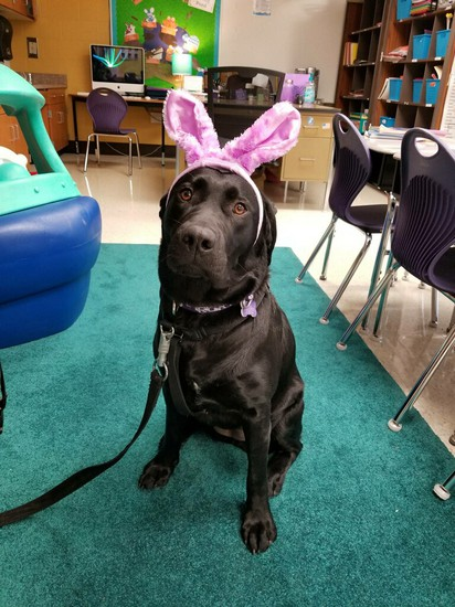 Rory, Service Dog at Dillsburg Elementary, Wishes Everyone a Very Happy Easter!